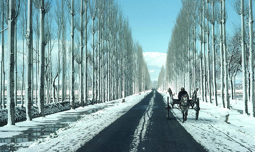 Fascinating Srinagar Trio
