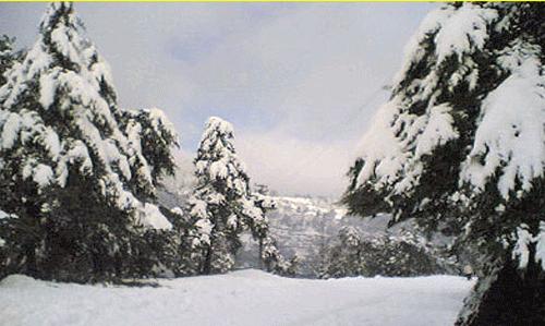 Dreamland Nainital