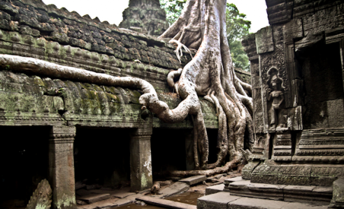 Discover Uniqueness of Angkor