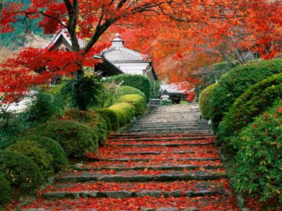 Scintillating Japan