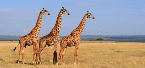 Epic South African Safari
