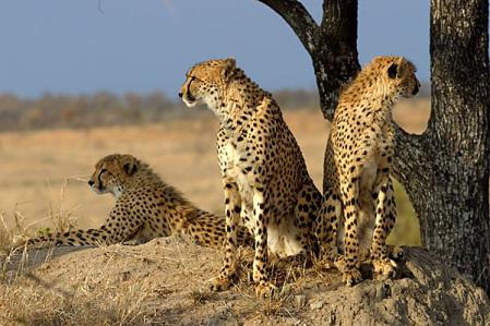 Touristic Kruger & Mpumalanga